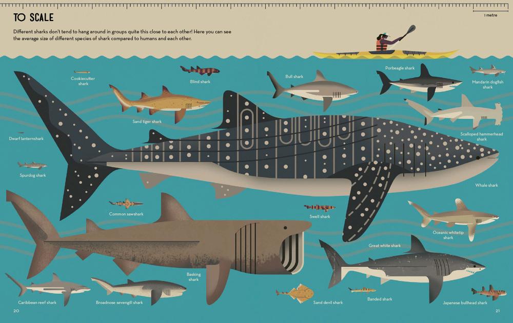 Image result for smart about sharks owen davey